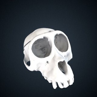 3d model of Macaca leonina: Cranium