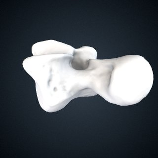 3d model of Pongo abelii: Talus Left