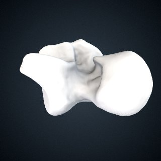 3d model of Pan troglodytes troglodytes: Talus Left