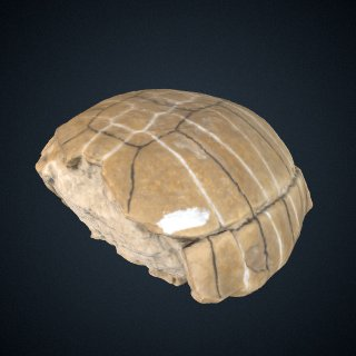 3d model of Stylemys nebrascensis Leidy, 1851