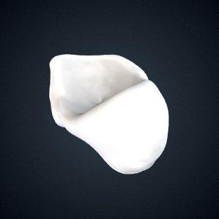 3d model of Pongo abelii: Navicular Left