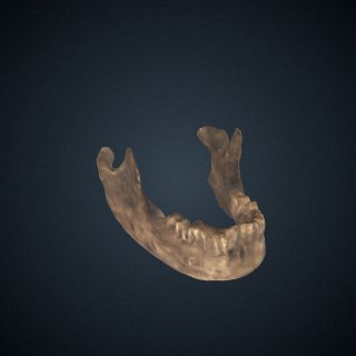 3d model of Homo neanderthalensis: mandible