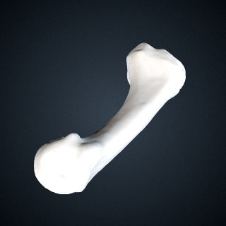 3d model of Pan troglodytes troglodytes: MT1 Right
