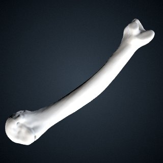 3d model of Pongo abelii: MT3 Left