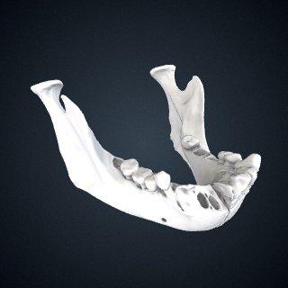 3d model of Pan troglodytes: Mandible