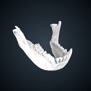 3d model of Trachypithecus obscurus carbo: Mandible