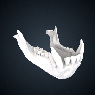 3d model of Erythrocebus patas: Mandible