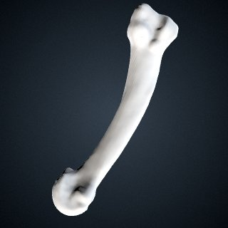 3d model of Pan troglodytes verus: MT2 Right