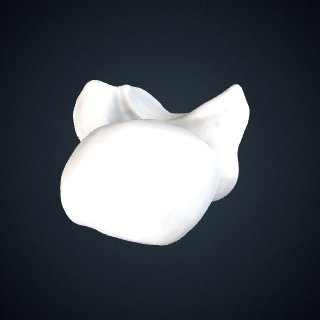 3d model of Pan troglodytes schweinfurthii: Talus Right