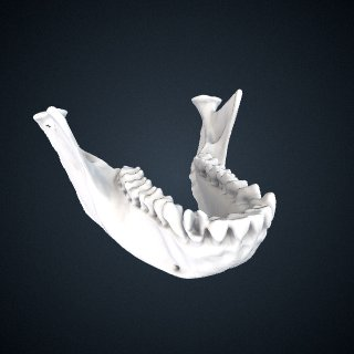 3d model of Procolobus verus: Mandible