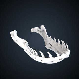 3d model of Varanus komodoensis: Mandible
