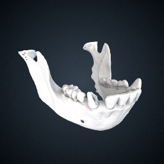3d model of Pan troglodytes schweinfurthii: Mandible