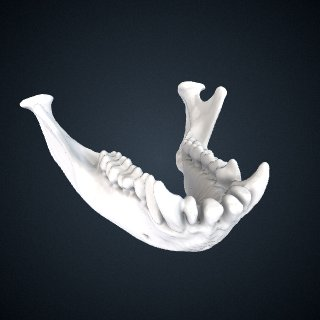 3d model of Miopithecus ogouensis: Mandible