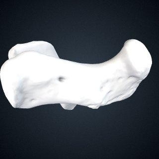3d model of Pongo abelii: Calcaneus Right