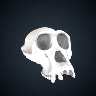 3d model of Pan troglodytes troglodytes: Cranium