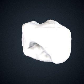 3d model of Gorilla beringei beringei: Cuboid Right