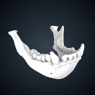 3d model of Hylobates agilis: Mandible