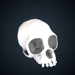 3d model of Hylobates klossii: Cranium