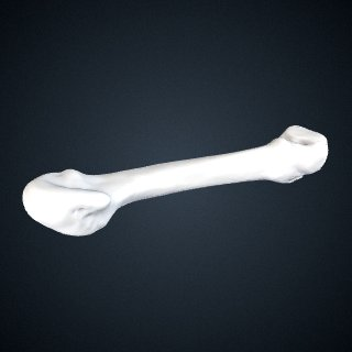 3d model of Pan troglodytes verus: MT4 Left