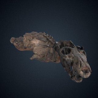 3d model of Thrinaxodon liorhinus Seeley, 1894