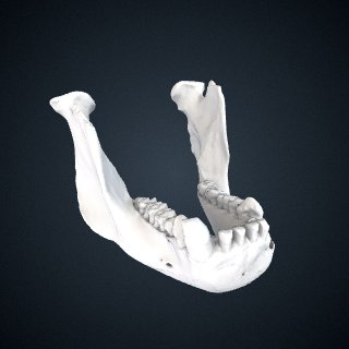 3d model of Gorilla gorilla gorilla: Mandible