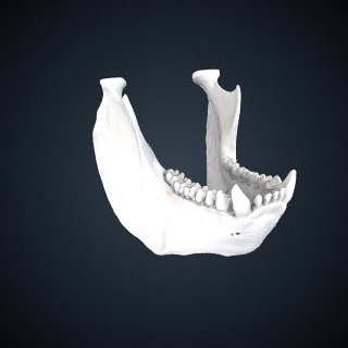 3d model of Alouatta guariba: Mandible