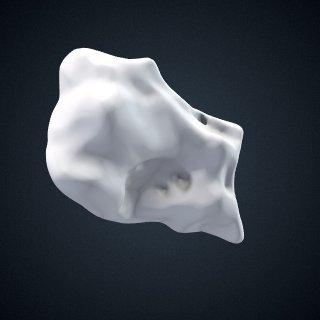 3d model of Pongo pygmaeus: Cuneiform1 Right