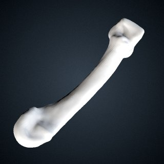 3d model of Pan troglodytes verus: MT4 Right