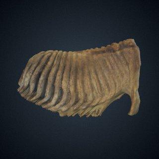 3d model of Elephas maximus