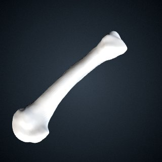 3d model of Pan troglodytes troglodytes: MT5 Right