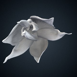 3d model of Embreea herrenhusana