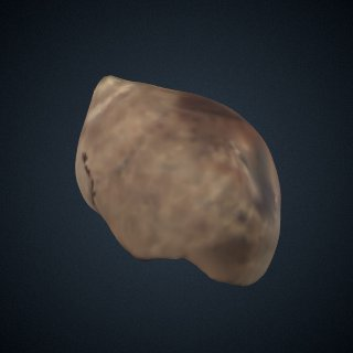 3d model of Littorina Shells