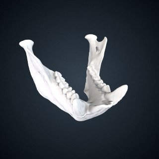 3d model of Chiropotes satanas utahickae: Mandible