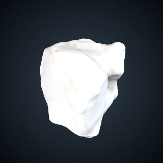 3d model of Gorilla gorilla gorilla: Cuboid Left