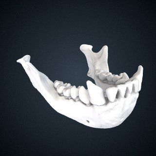 3d model of Hylobates lar vestitus: Mandible