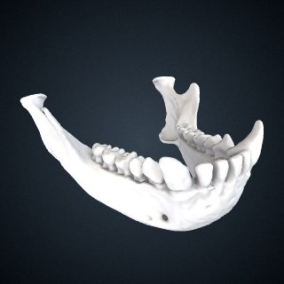 3d model of Hylobates muelleri abbotti: Mandible