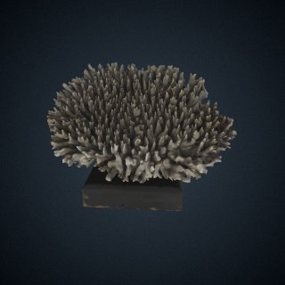 3d model of Madrepora surculosa