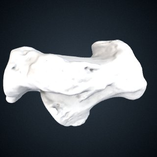 3d model of Gorilla gorilla gorilla: Calcaneus Right
